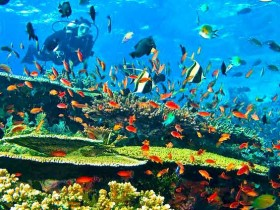 Fishes-Corals-and-Marine-Lives-in-Komodo-National-Parks-Diving-Spot